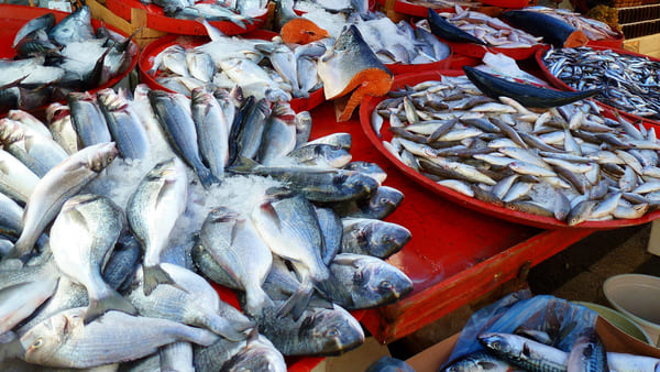 Il-pesce-di-stagione-in-autunno