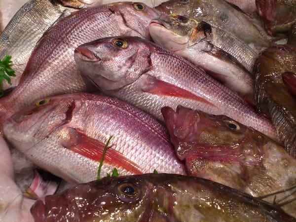 Il-pesce-di-stagione-in-estate