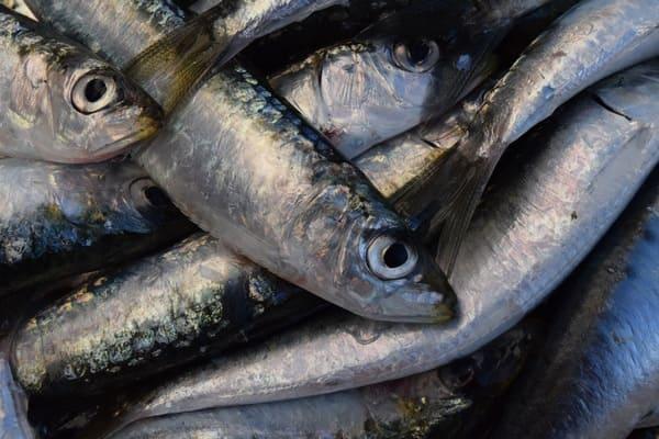 Il-pesce-di-stagione-in-inverno