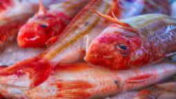 pesci-di-stagione-a-dicembre