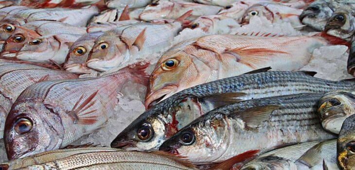 pesci-di-stagione-a-maggio